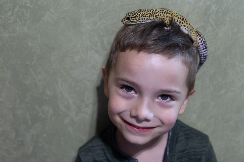 Child with leopard gecko on his head