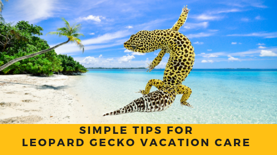 Leopard Gecko Vacation Care Tips