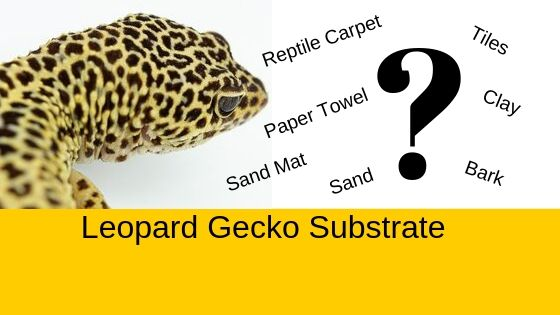 leopard gecko bedding and substrate options